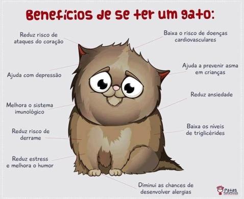 deiadietrich-beneficios-de-se-ter-um-gato